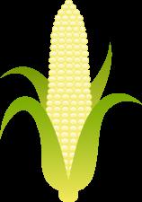 sweet_white_corn_husk_0